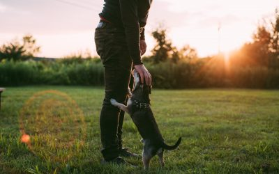 """""""Dog Law"""" – Who keeps the dog after separation?"""